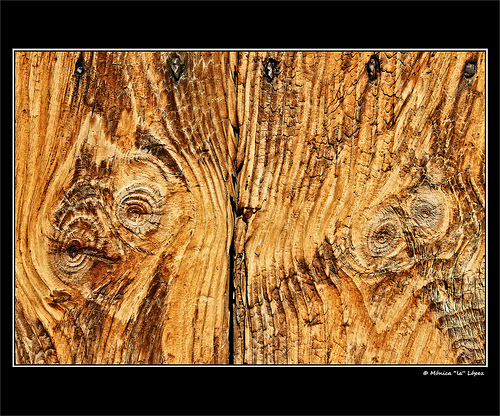 De esta madera se extrae el aceite esencial de sándalo